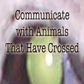 animalmediumshipad