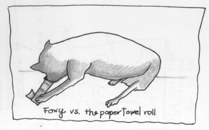 foxypapertowel