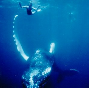 whaleswim